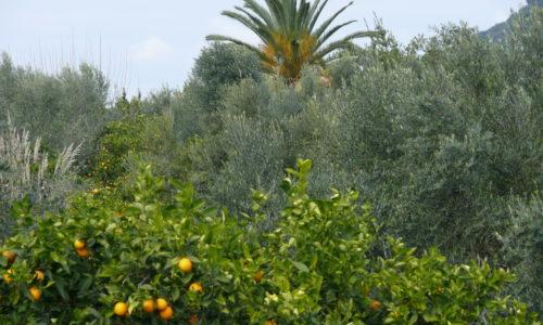 organic farm silver leaf in year 2013