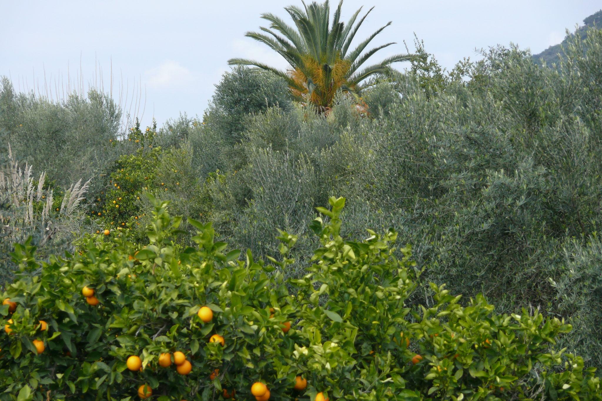 βιολογική φάρμα silver leaf το έτος 2013