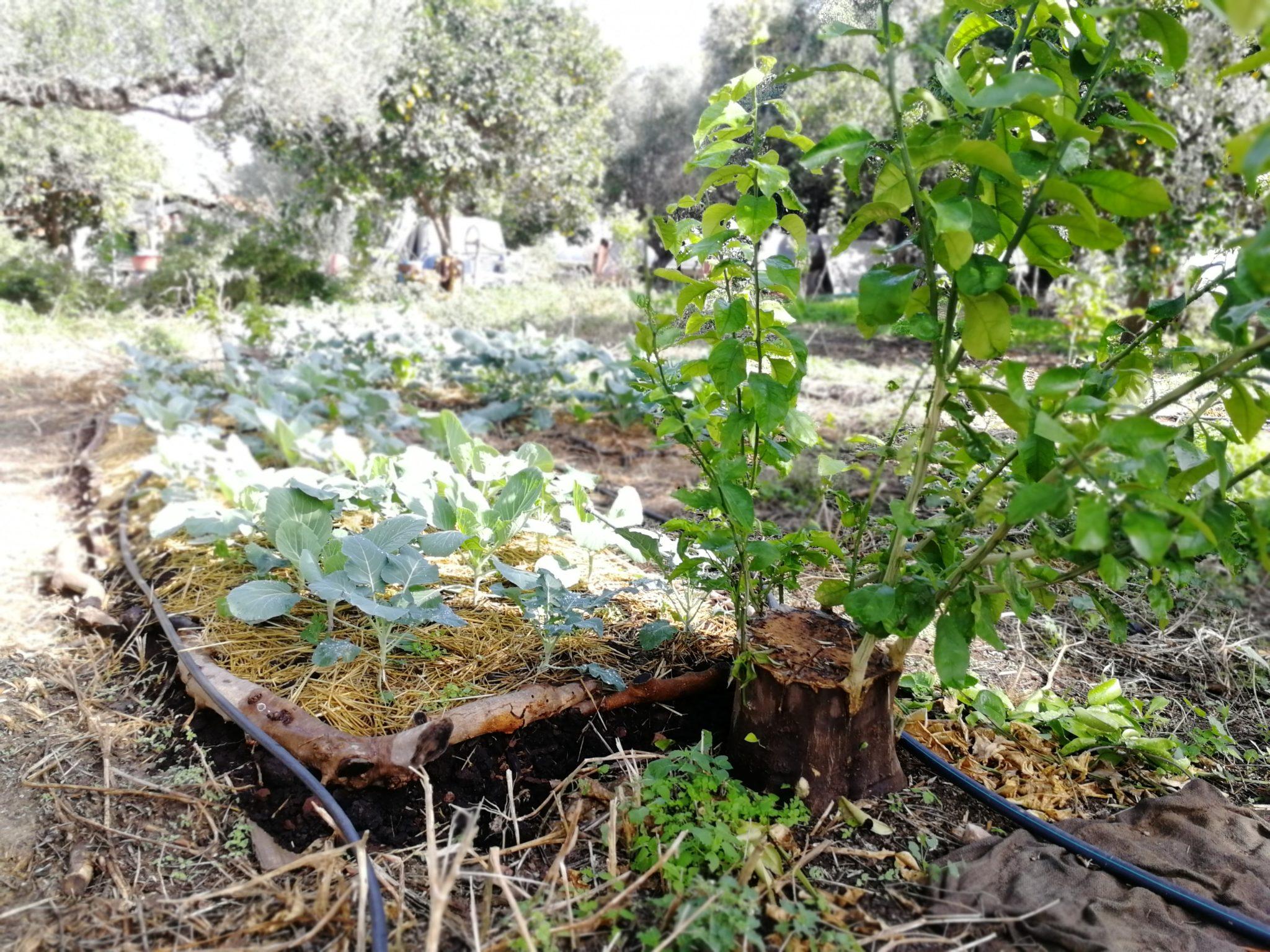 Λαχανόκηπος στο βρώσιμο δάσος