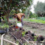 Planting during our food forest workshop