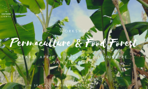 Permaculture & Food Forest (1)