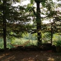 αιώρα_στο_δάσος