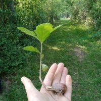 baby_tree_header_Giulia_Sargenti