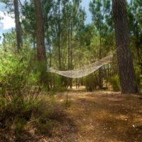 hammock-forest-