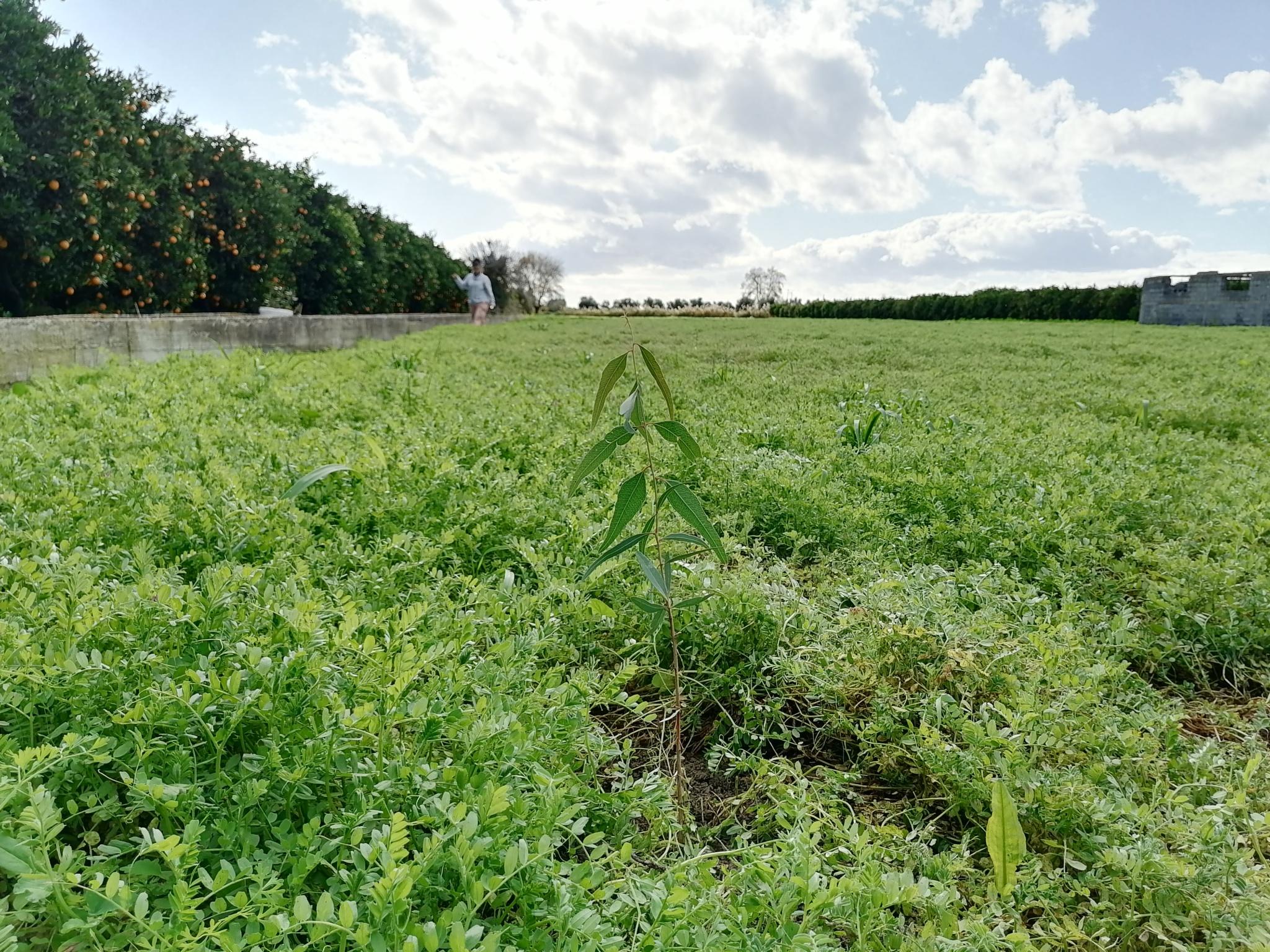 Dharma Sporoi field